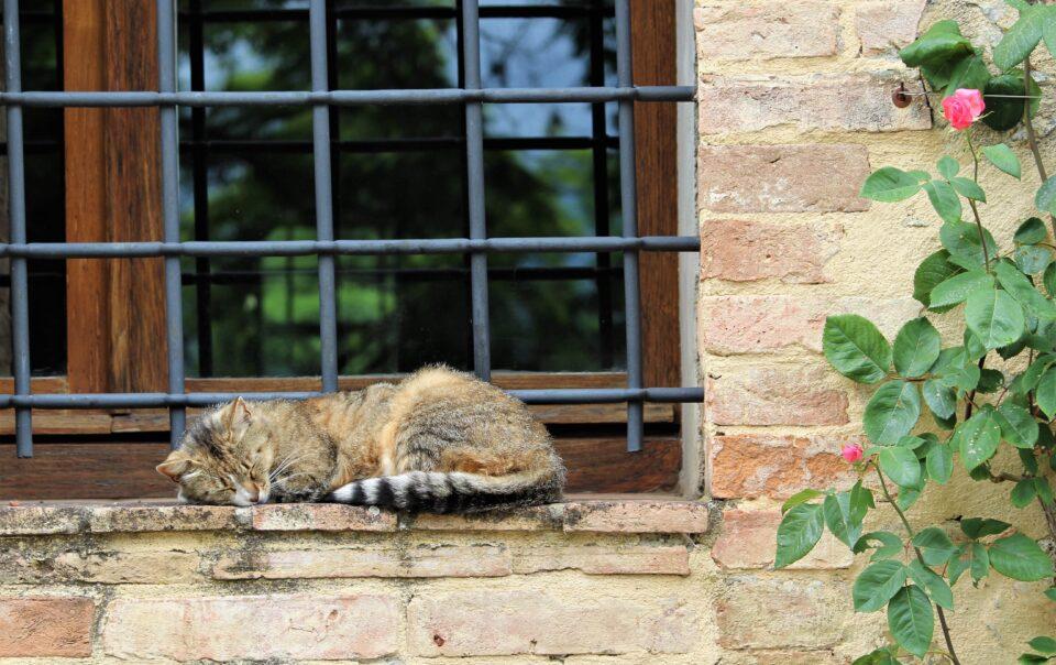 fjaka i macka spava na prozoru